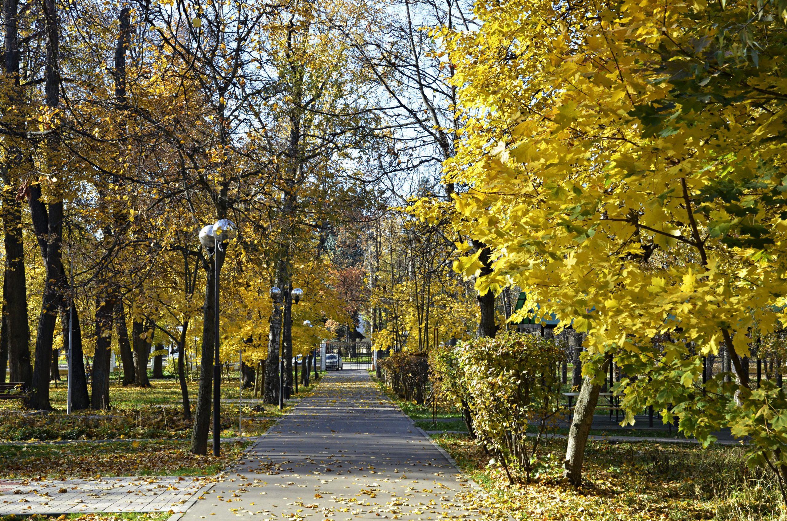 Сезонный анализ деревьев и кустарников провели дендрологи столицы